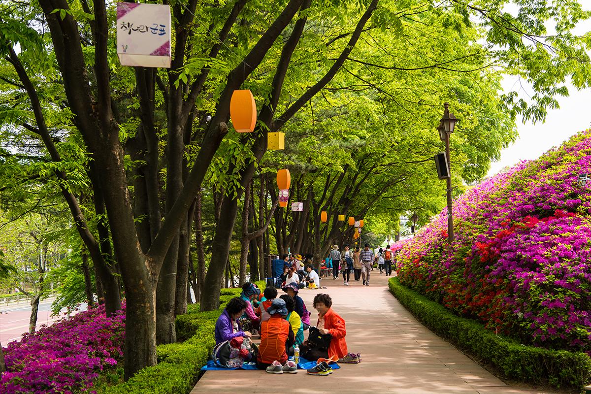 13 군포철쭉공원