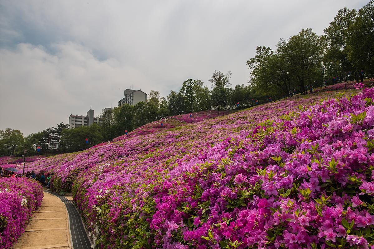 14 군포철쭉공원