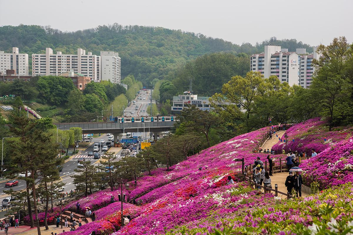 15 군포철쭉공원