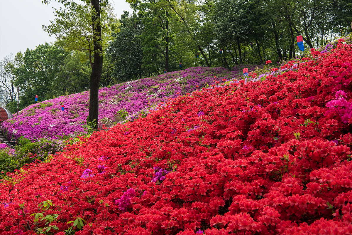 16 군포철쭉공원