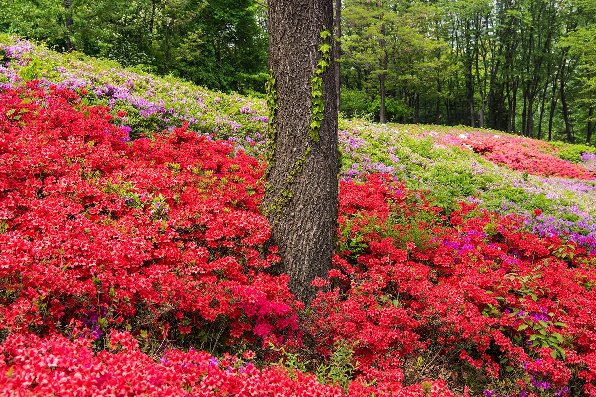 17 군포철쭉공원
