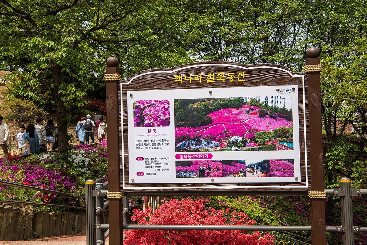 22 군포철쭉공원