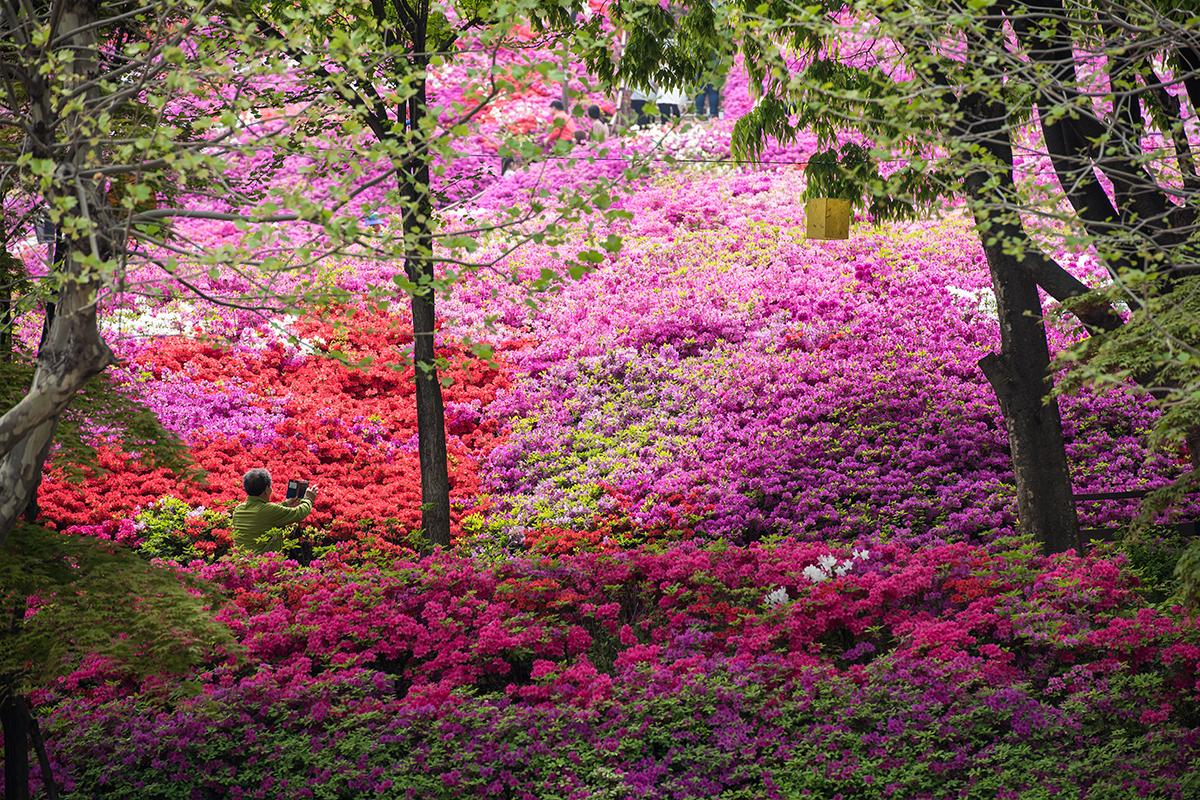 28 군포철쭉공원
