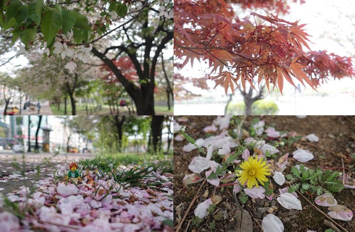봄이 남긴 흔적