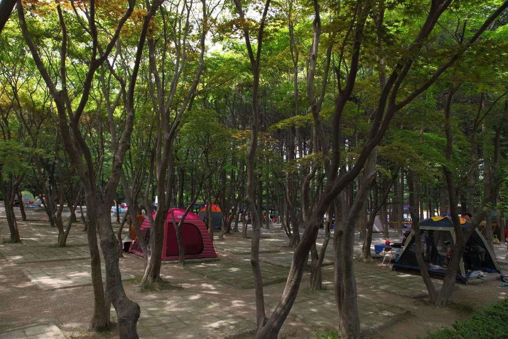 광주 금원 수목원 수영장 위쪽의 캠핑 전용구역