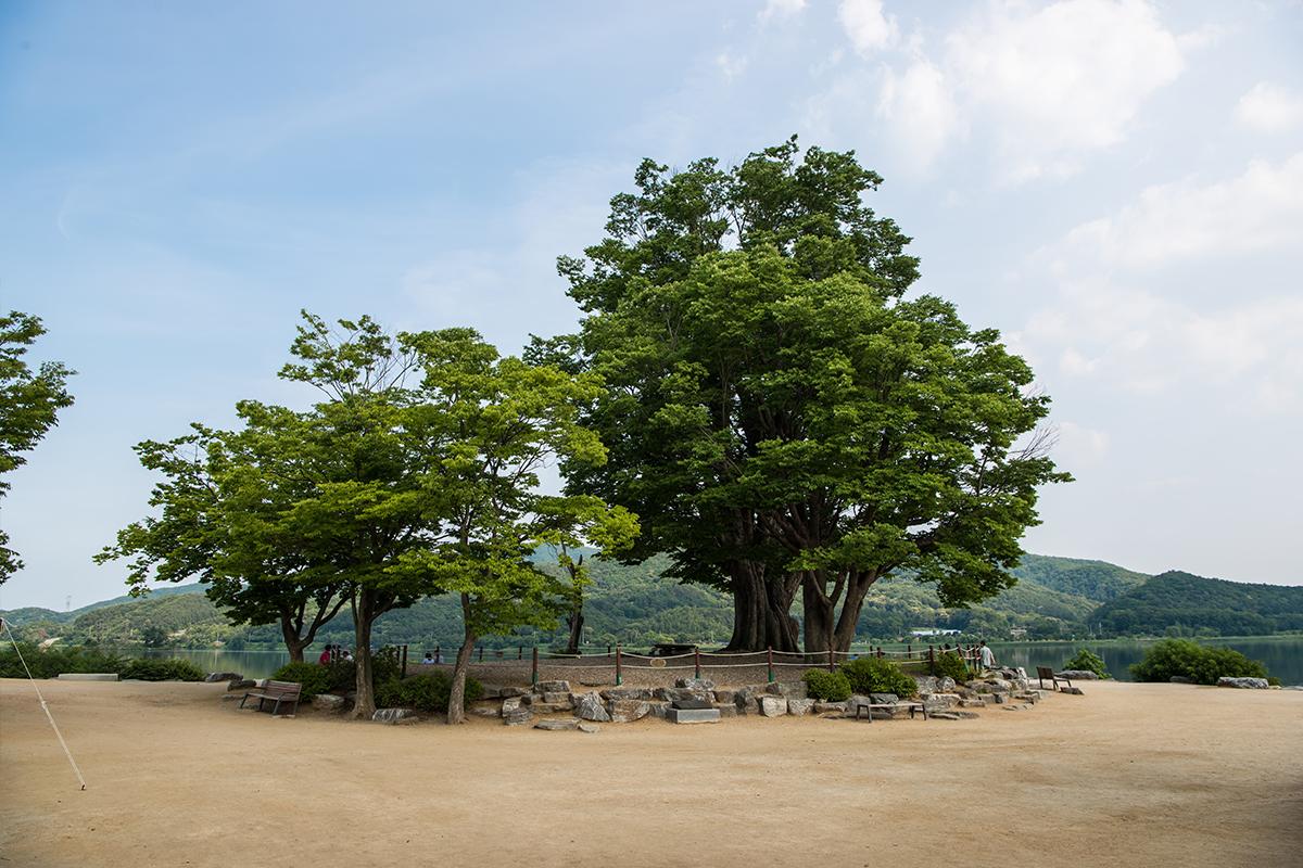 두물머리 입구 나무들