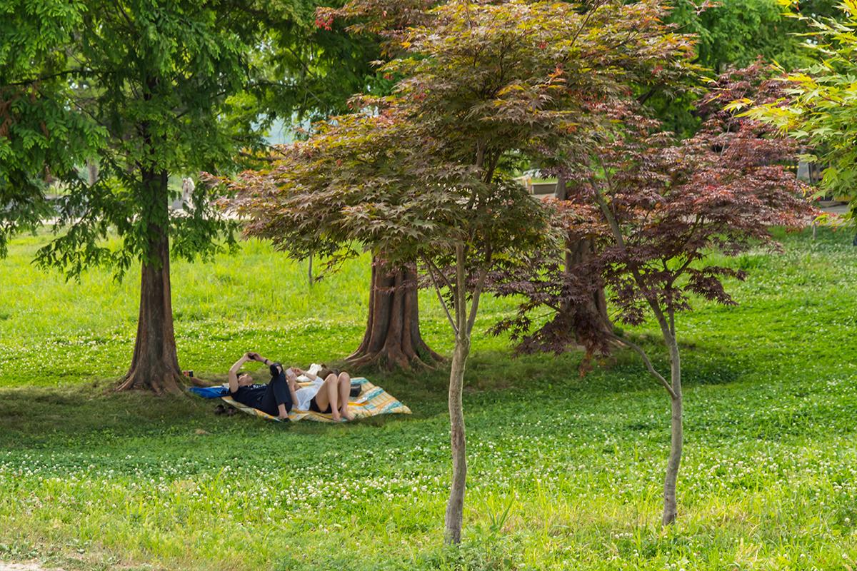 풀밭 위 나무그늘에서 쉬는 사람들