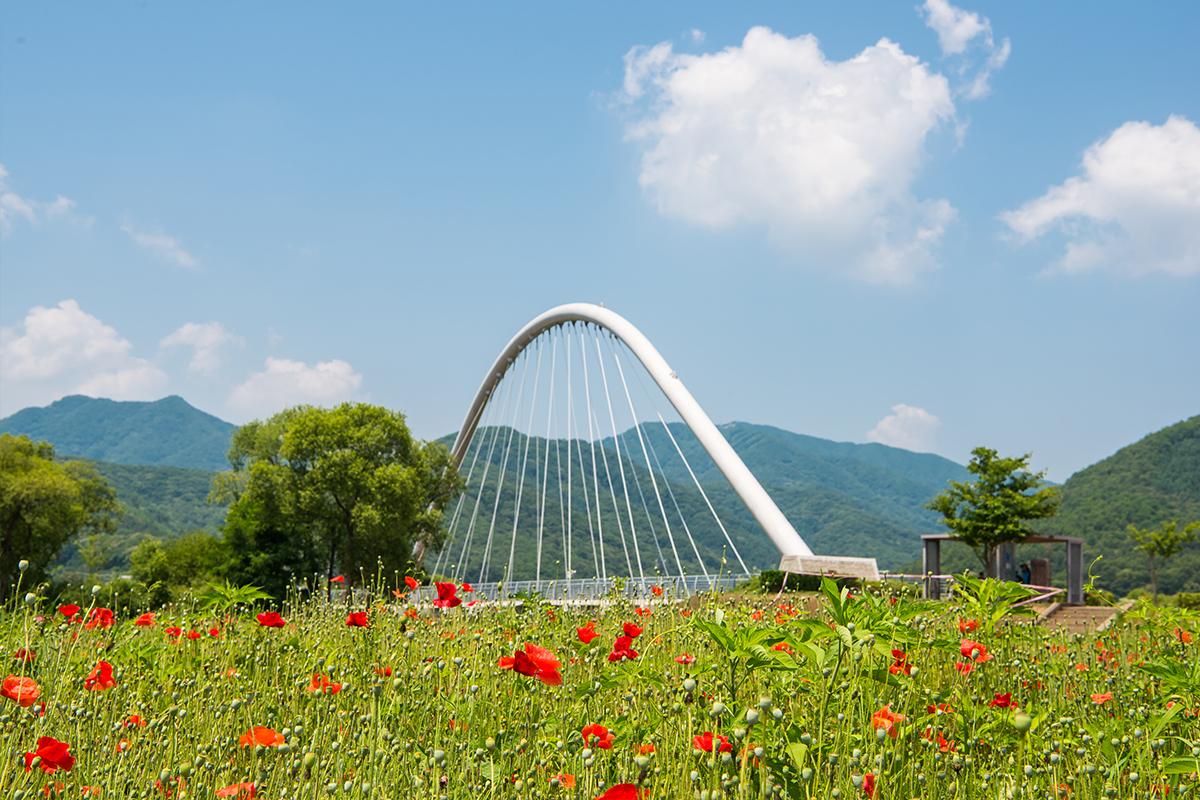 풀꽃들과 다리가 보이는 풍경