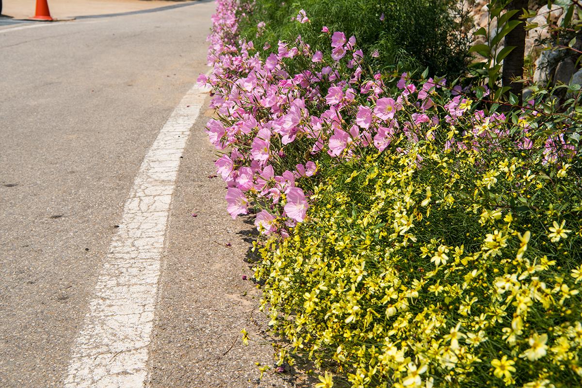 길가의 들꽃들