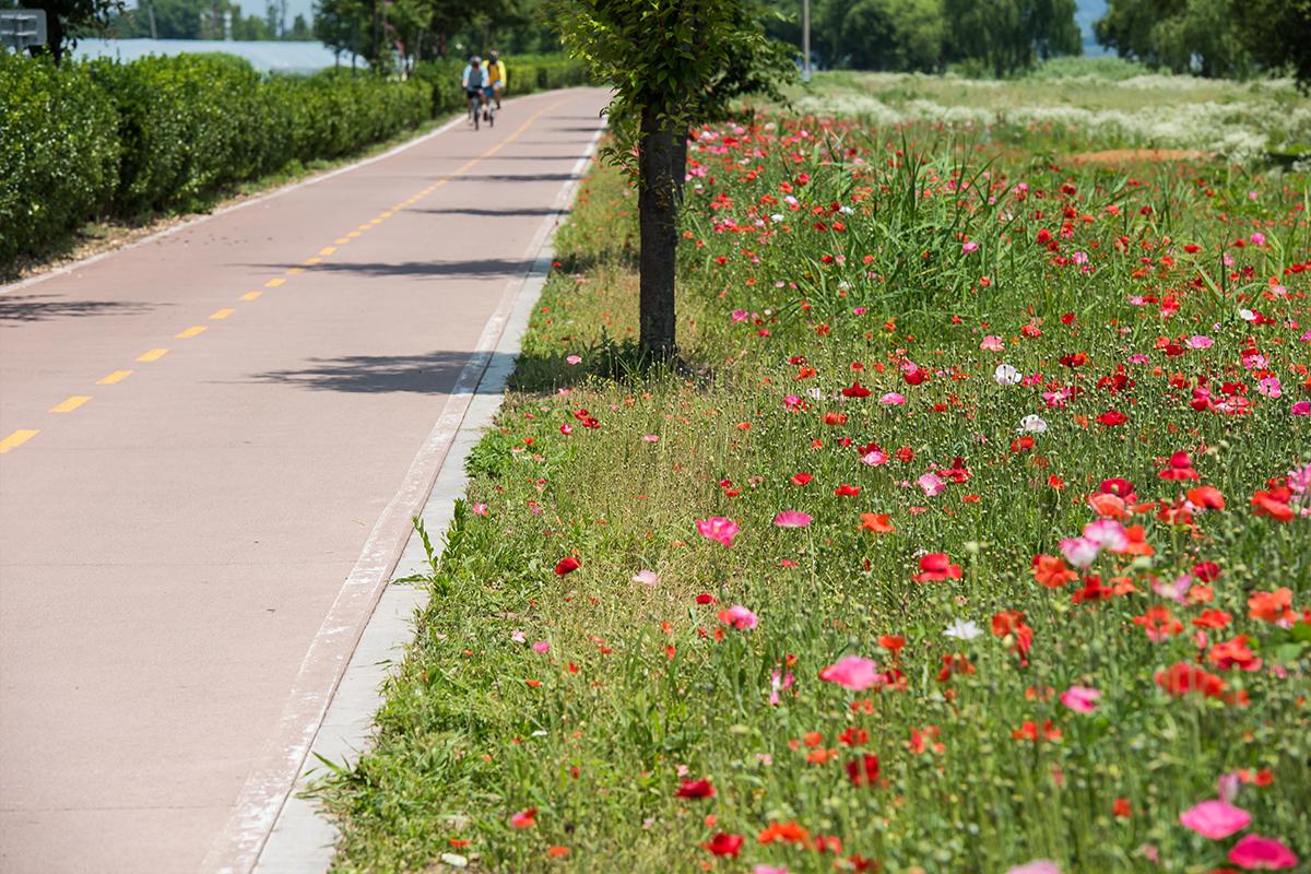 자전거를 타는 풍경