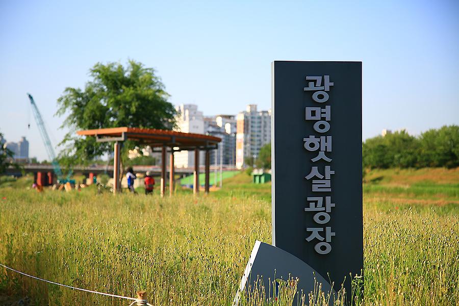 광명안양천장미원,광명햇살광장