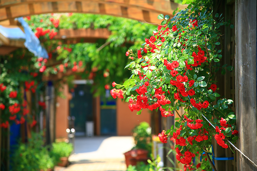 빨간색 꽃이 이쁘게 펴져 있는 해방촌 어느 가게 모습