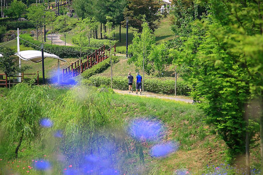 공원을 산책하는 사람들