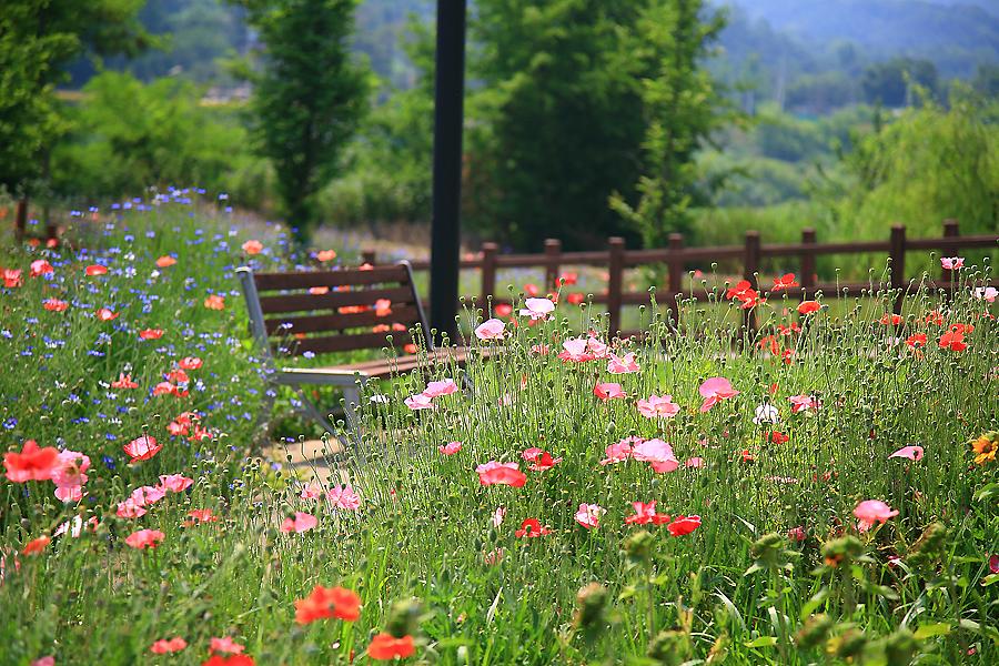 양귀비꽃이 가득한 공원