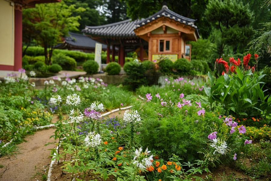 봉선사 앞 꽃밭