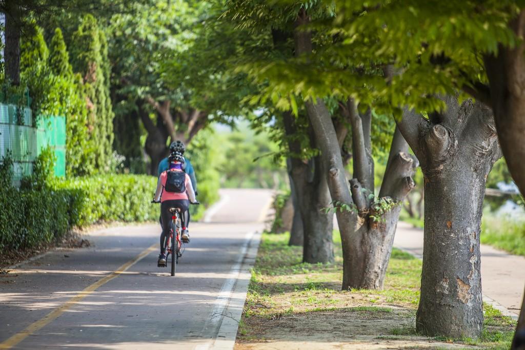 자전거를 타고 숲 사이로 난 도로위를 달리는 사람들의 뒷모습