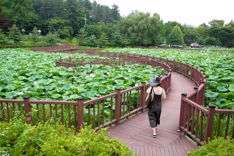 연못 데크길을 걸어가는 사람