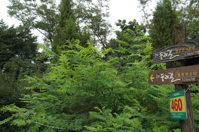 안내판과 우거진 숲 사진