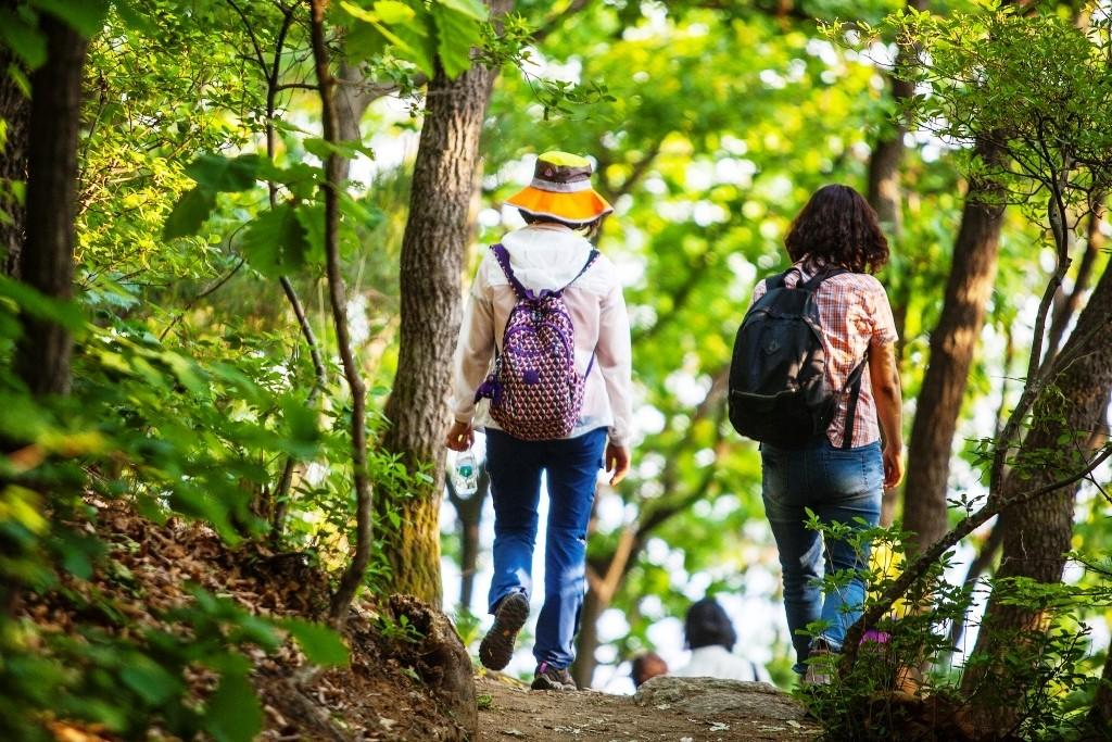 평화누리길 6코스의 숲길을 걷는 사람들