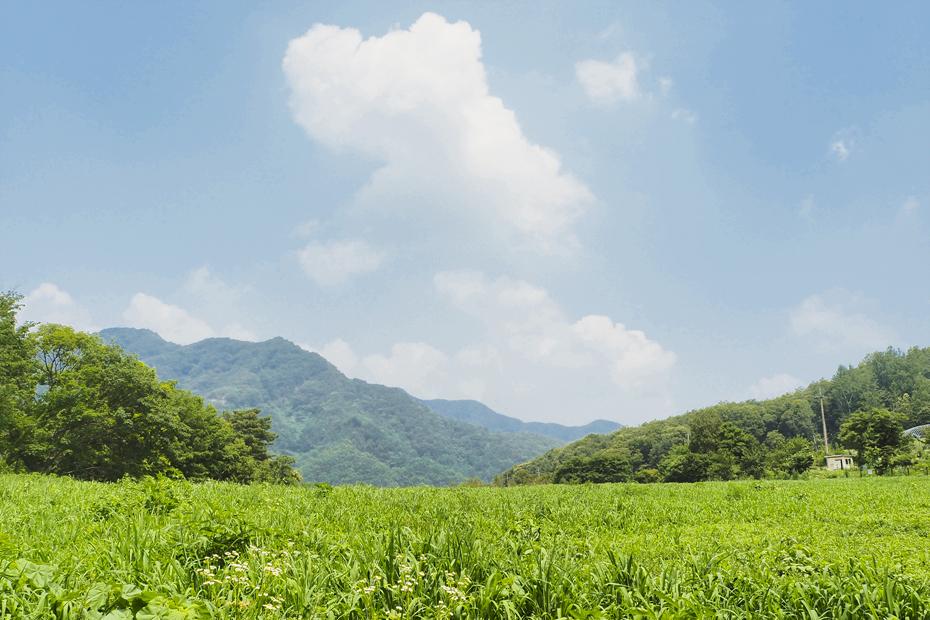 푸른풀밭과 하늘