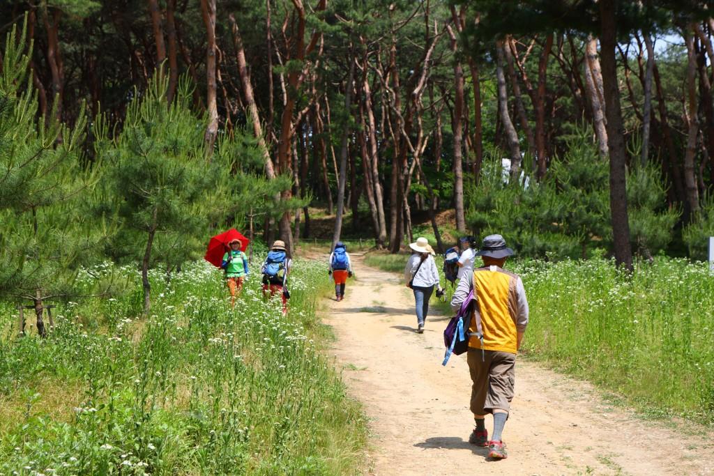 숲길로 접어드는 트레킹 길목의 사람들