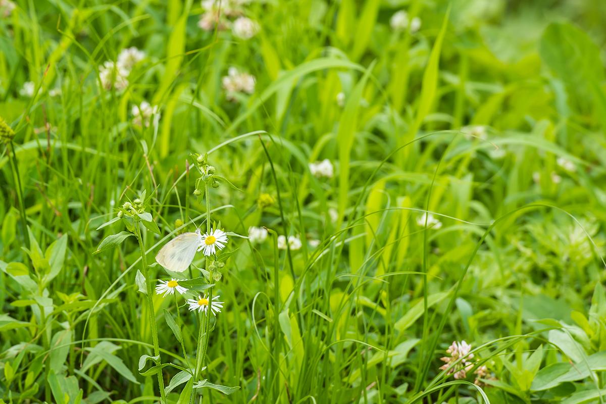 나비와 풀꽃