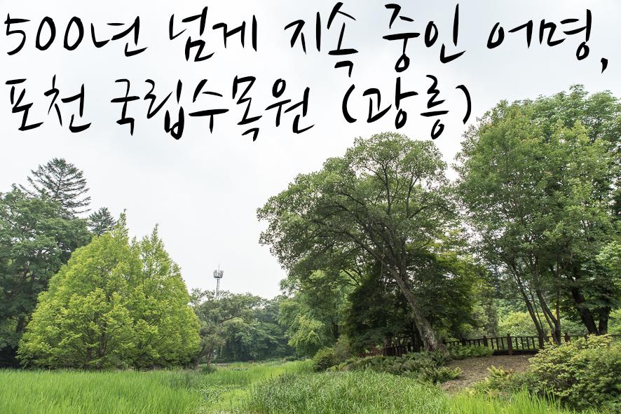 500년 넘게 지속중인 어명, 포천 국립수목원(광릉)
