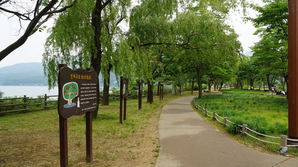 버드나무 산책길