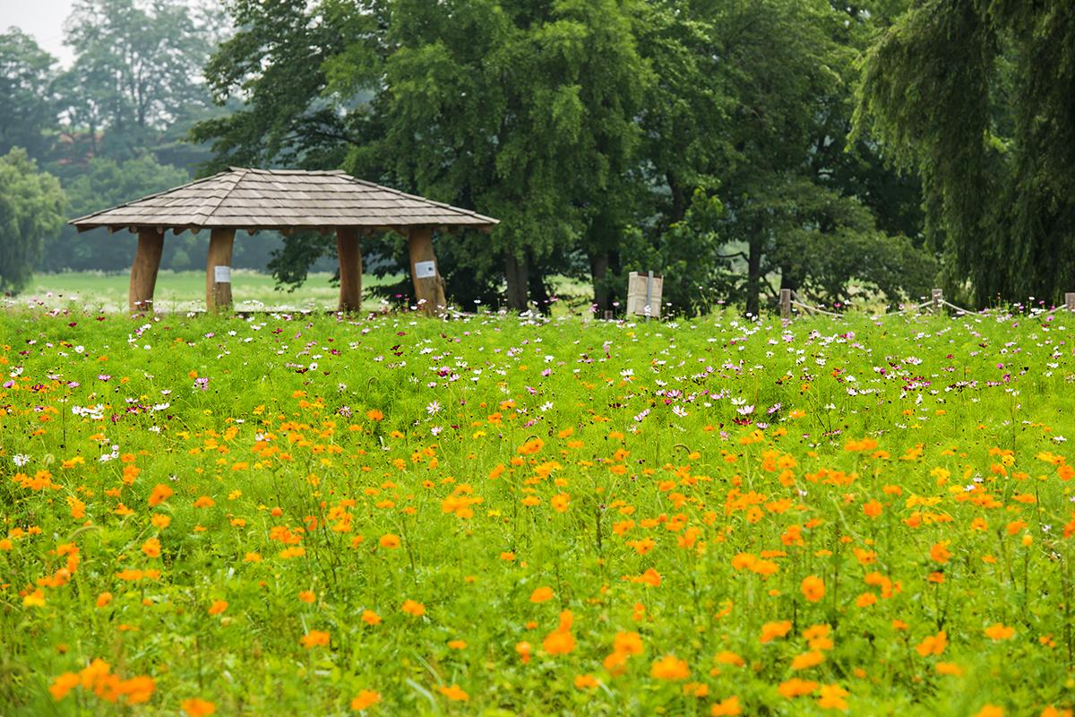 오두막과 꽃들
