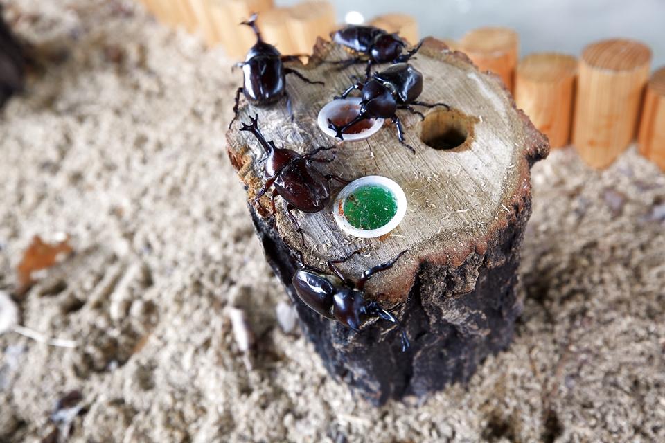 사슴벌레와 장수하늘소