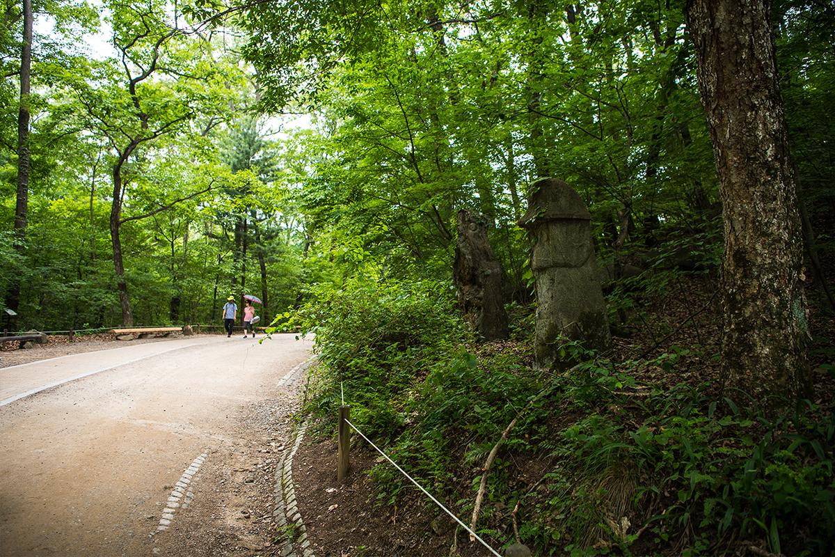 숲길을 산책하는 사람들