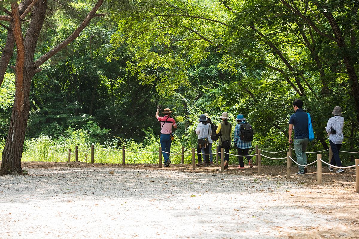 숲길을 걷는 사람들