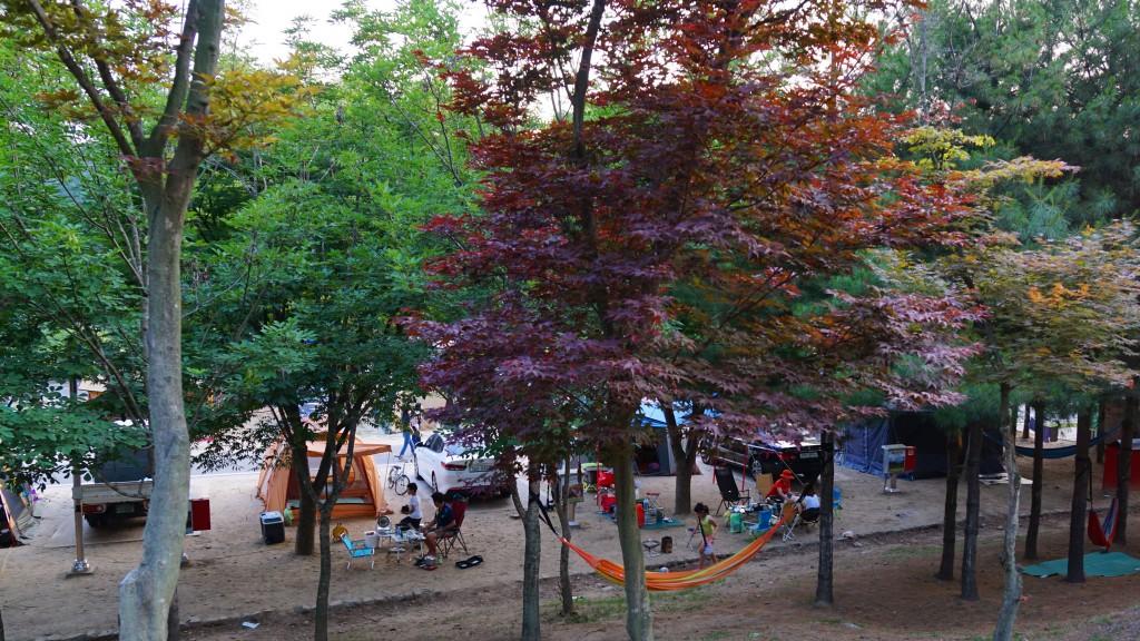 캠핑장에 심어진 나무들