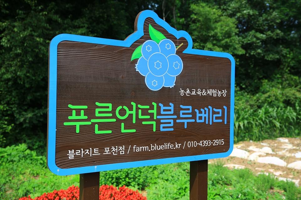 농촌교육&체험농장 푸른언덕블루베리 표지판