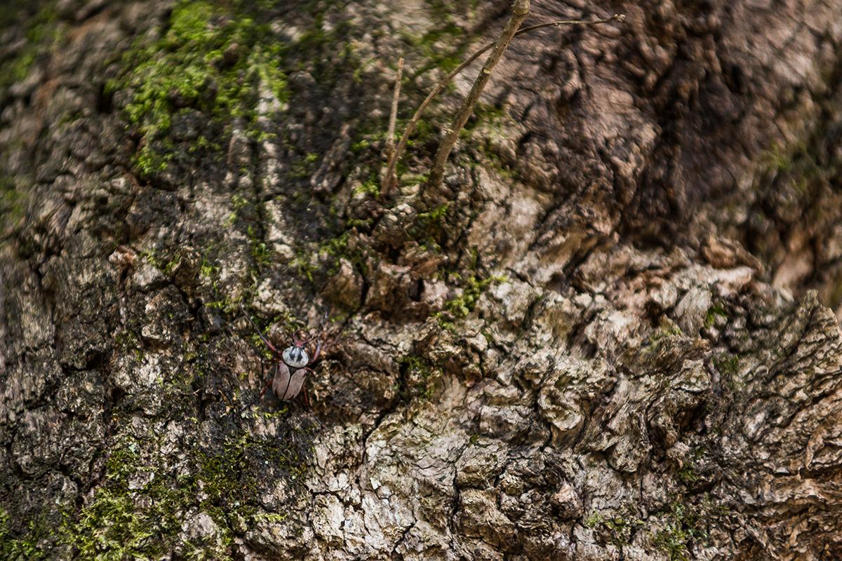 나무에 붙어있는 곤충