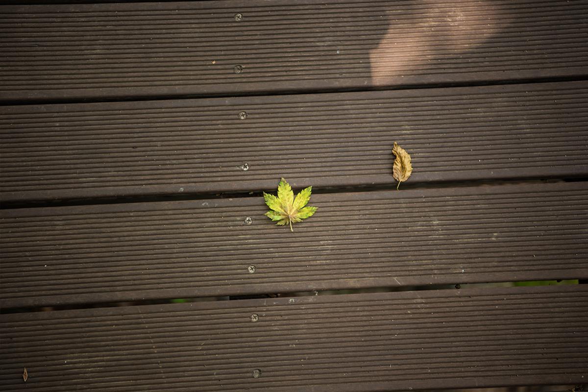 데크길에 있는 잎들
