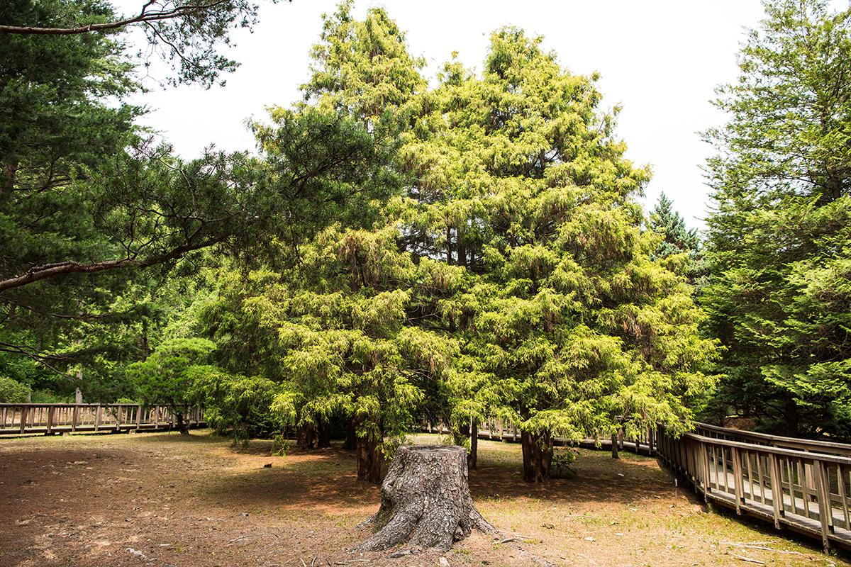 울창한 나무숲