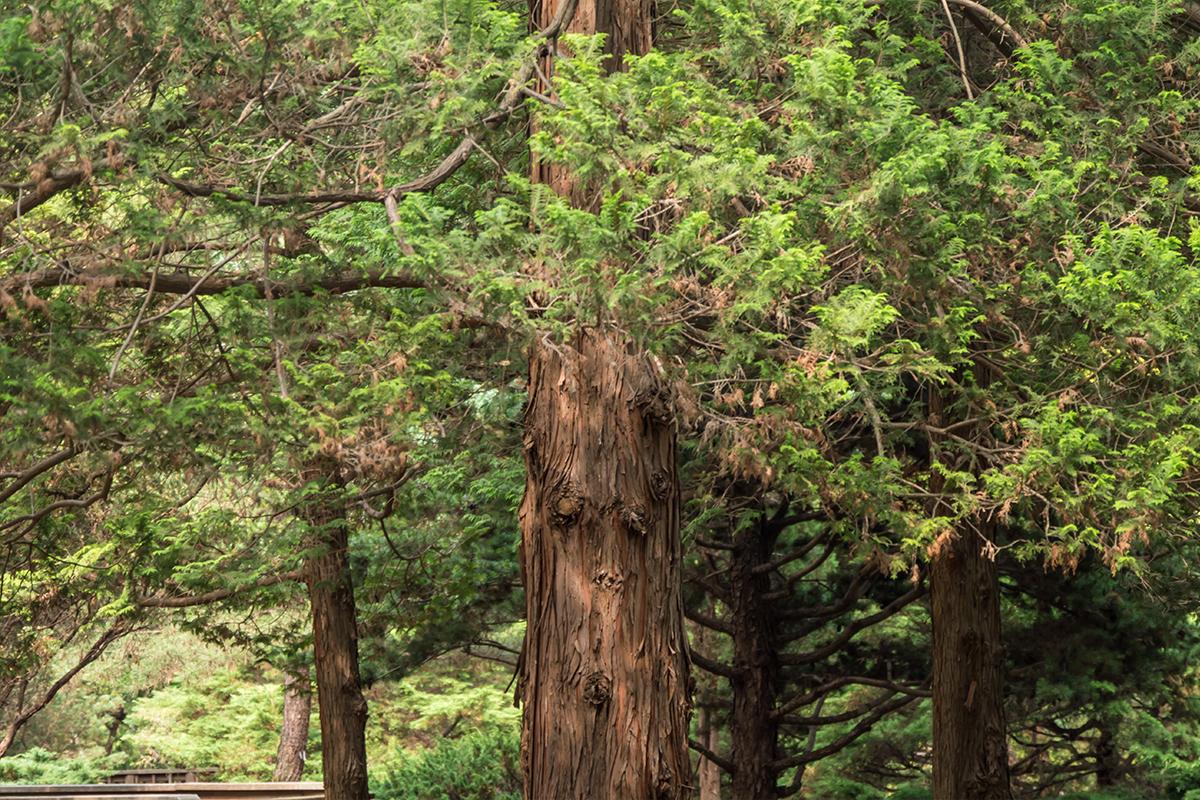 울창한 나무들