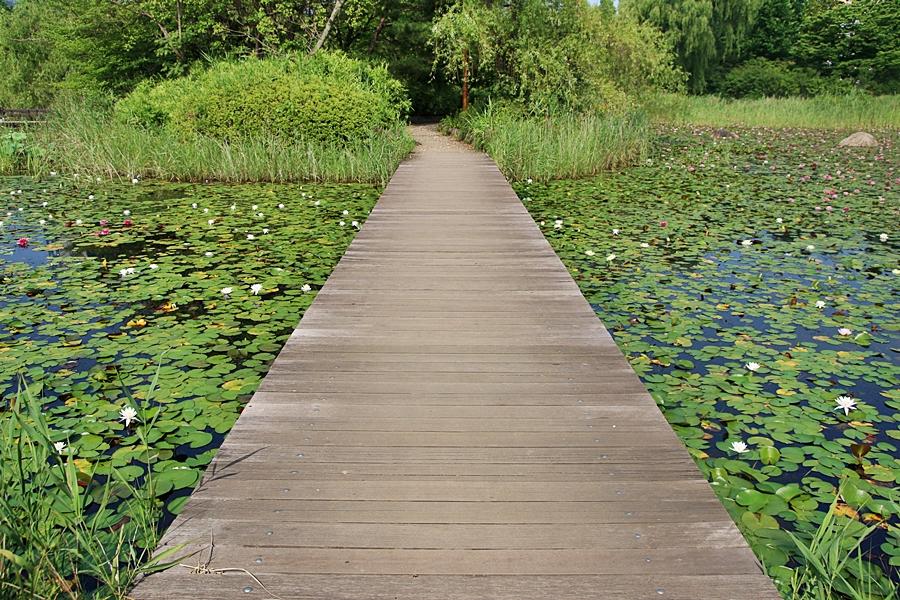 연못을 가로 지르는 다리