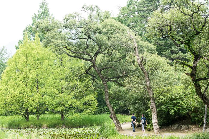 울창한 나무들과 사람들