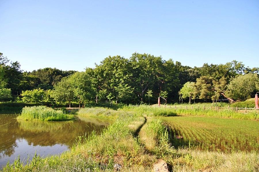 논과 나무가 있는 풍경