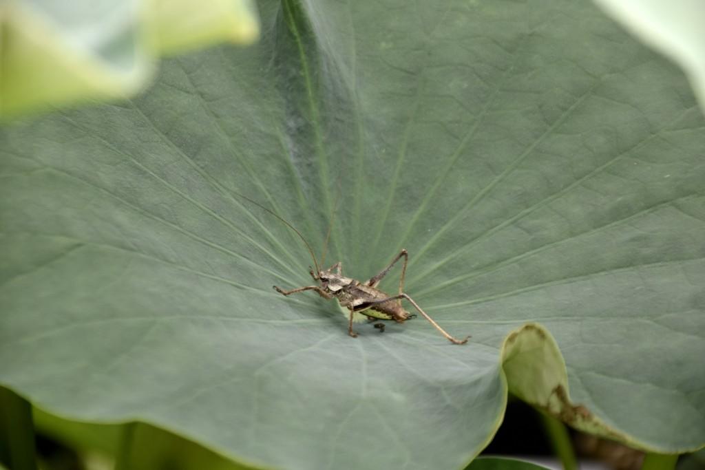연잎 위 곤충