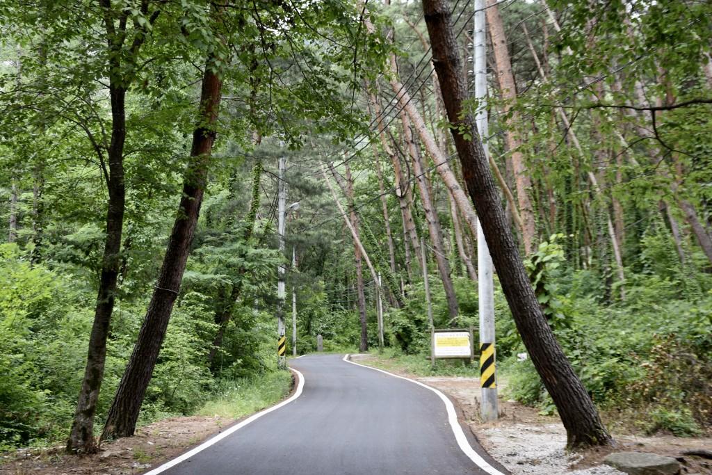 아스팔트길과 울창한 나무들