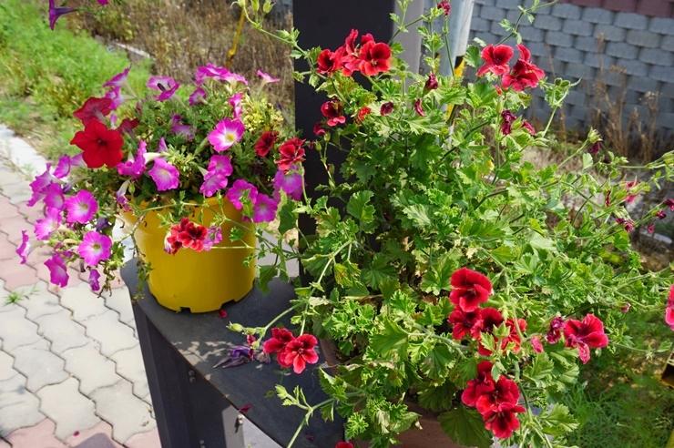 화분의 꽃들