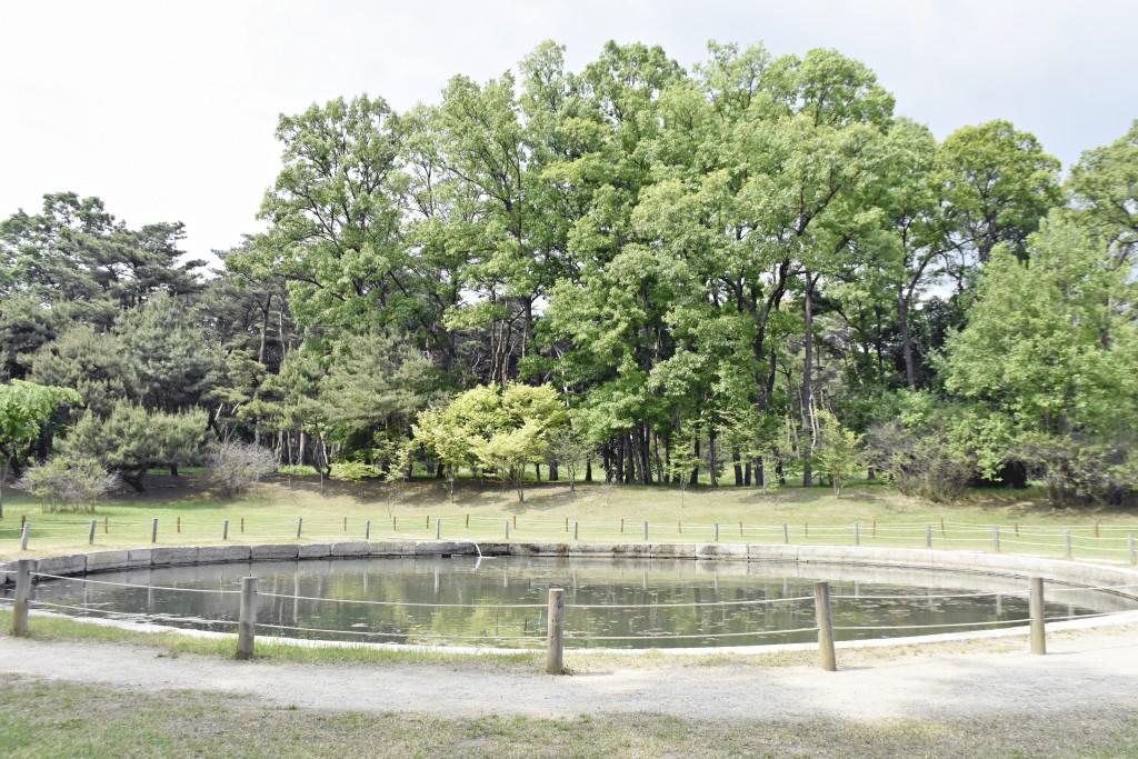 나무와 연못
