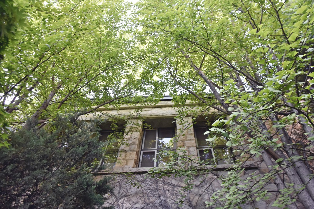 덩굴과 나무가 우거진 건물
