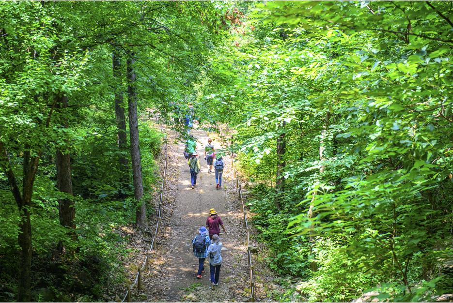 숲길을 트레킹하는 사람들