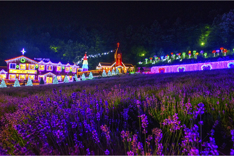 라벤더축제의 모습