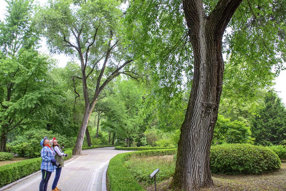 수목원의 큰 나무를 보는 사람들