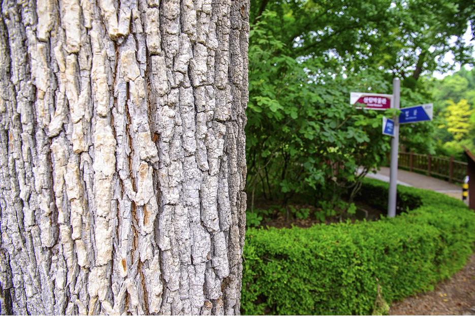 비슬나무와 표지판